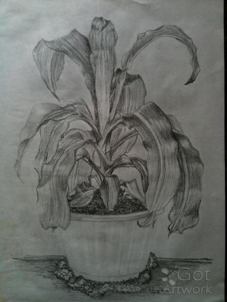 Solitary Corn Plant