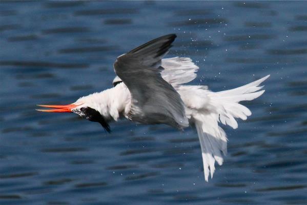 Wrong Tern