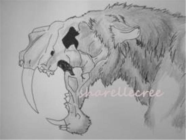 Bone And Fur
