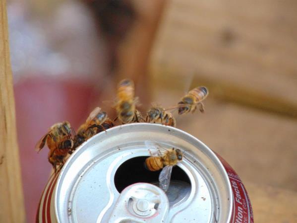 Bee's In Flight