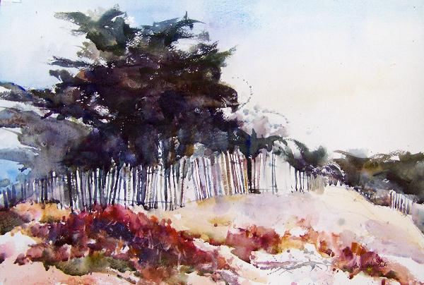 Pajaro Dunes Cypress