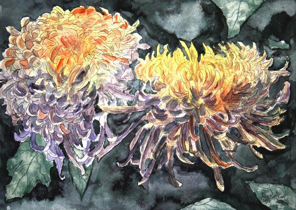 Chrysanthemum Flower Art Print