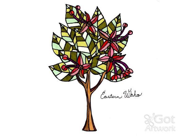 Eastern Wahoo Tree