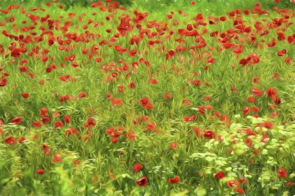 Poppyflower VII
