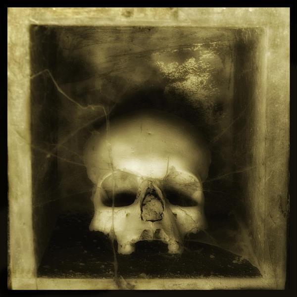Skulls 3 - Augusto De Luca Photographer