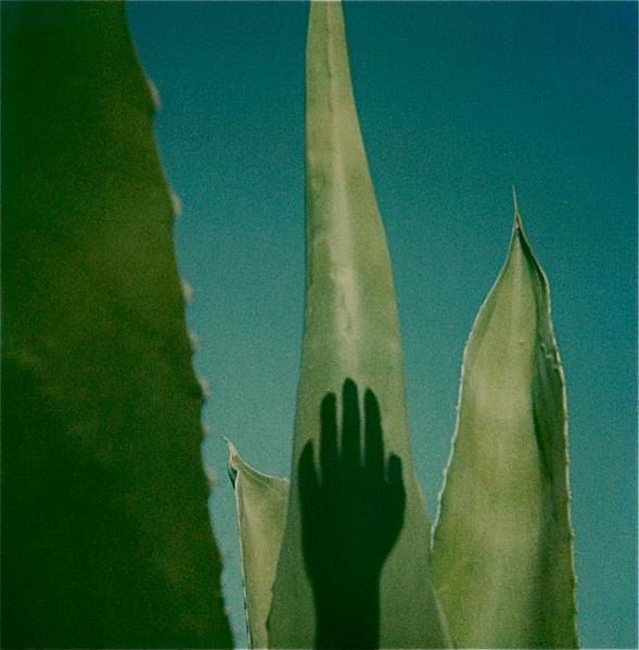 Fotografia Italiana / Polaroid Sx 70, Di Augusto De Luca / 05