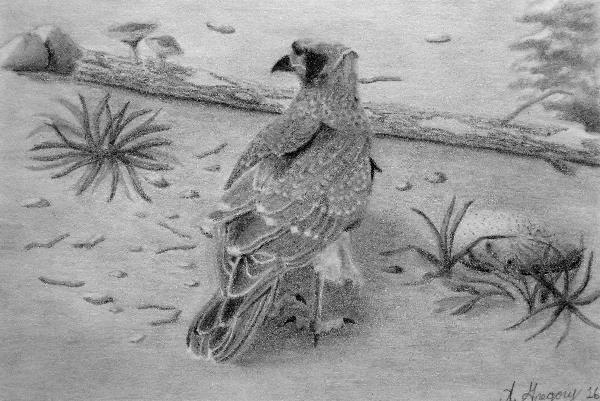 Chimango Caracara Falcon