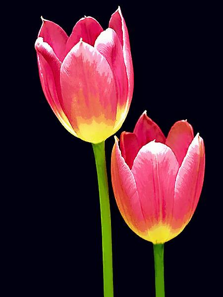 Floral 2 Pastel 18X24