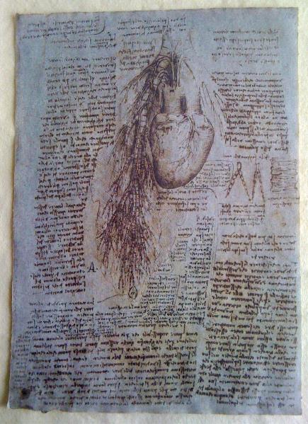 Leonardo Da Vinci - Heart