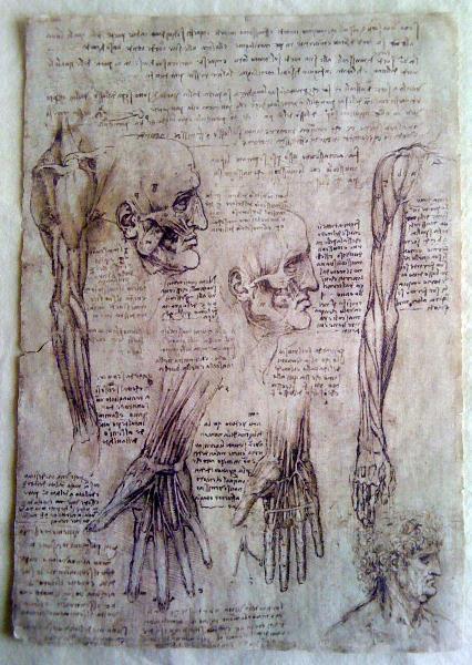 Leonardo Da Vinci - Hands