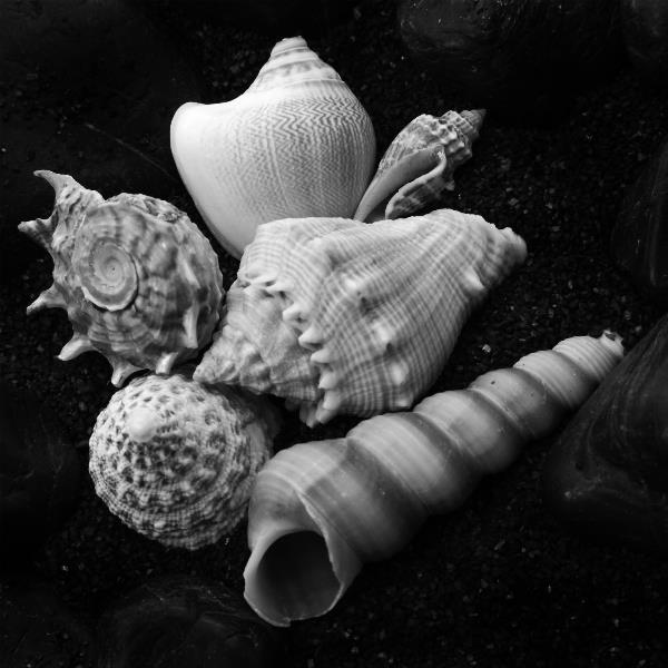 Shell No 10 Picture