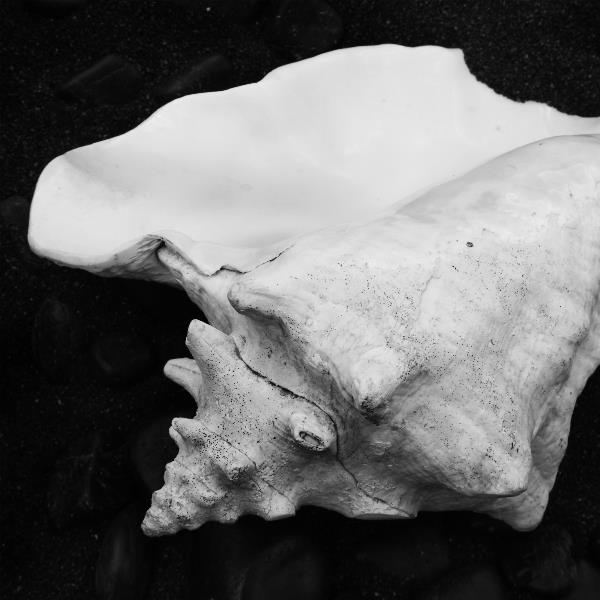 Shell No 4 Picture