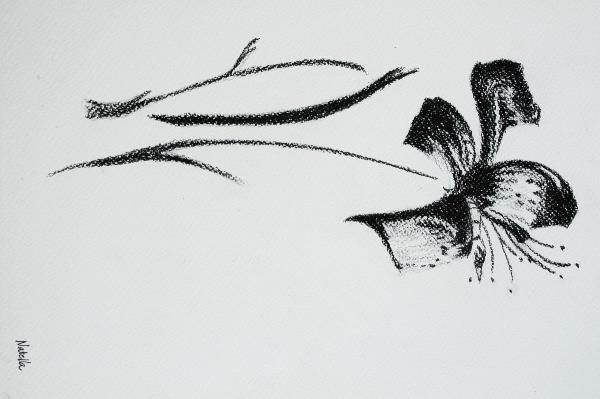 Lily By Natella Mammadova