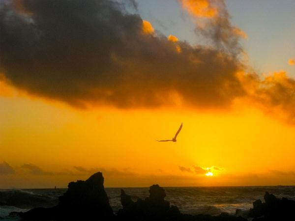 Flying In Sunset