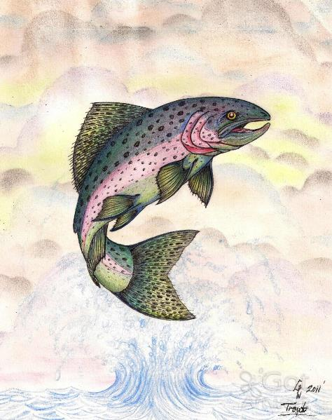 The Majestic Rainbow Trout Original Drawing