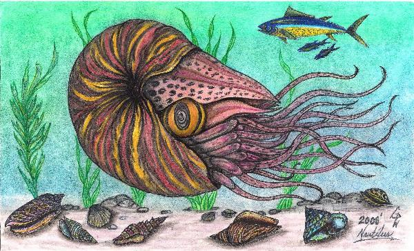 The Legendary Nautilus Sea Creature