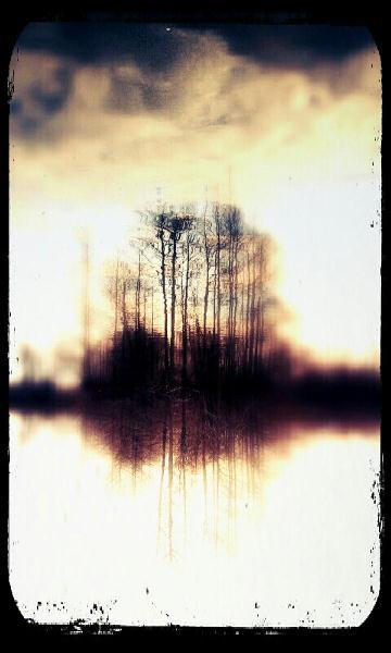 Island Of Trees On Lake
