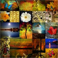 Collage From The Nature As Greeting Card