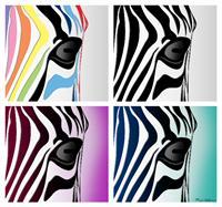 Zebra Colage