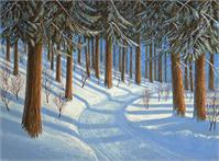 Tahoe Forest In Winter As Greeting Card