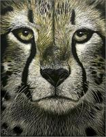 Cheetah  As Greeting Card