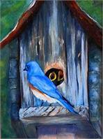 Bluebird Fimily
