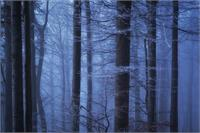 Misty Forest As Greeting Card