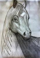 Sketch- Horse