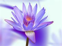 Violett-blue