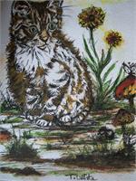 Curisoty Cat