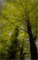 Trees As Poster