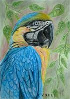 ImagBlue And Yelow Macawe