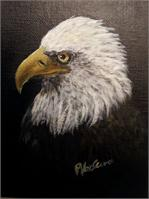 Bald Eagle As Framed Poster