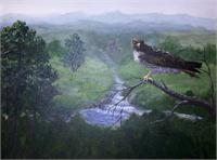 Red Tailed Hawk As Greeting Card