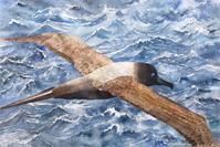 Albatross As Framed Poster