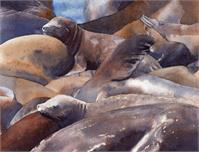 Pier 39 Sunning Sea Lions As Framed Poster