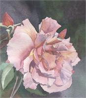 San Francisco Rose As Framed Poster