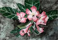 Desert Rose Flower Painting