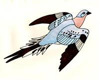 Passenger Pigeon As Greeting Card