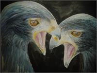 Screaming Hawks