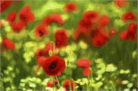 Poppyflower VI As Framed Poster
