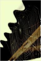 Spider-net