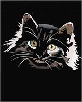 Gato En Negro
