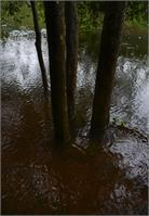 Pookkode Lake