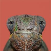Natural Selection. Chameleon.