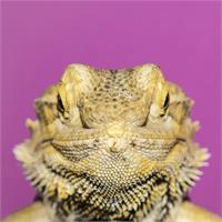 Natural Selection. Lizard.