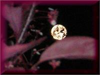 Night Of The Full Moon Peekin Through The Tree