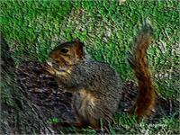 My Squirrel