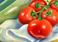 Tomatoes Still Life As Greeting Card