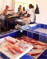 Fish Monger In Marigot St Martin